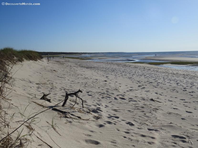 cape cod littoral
