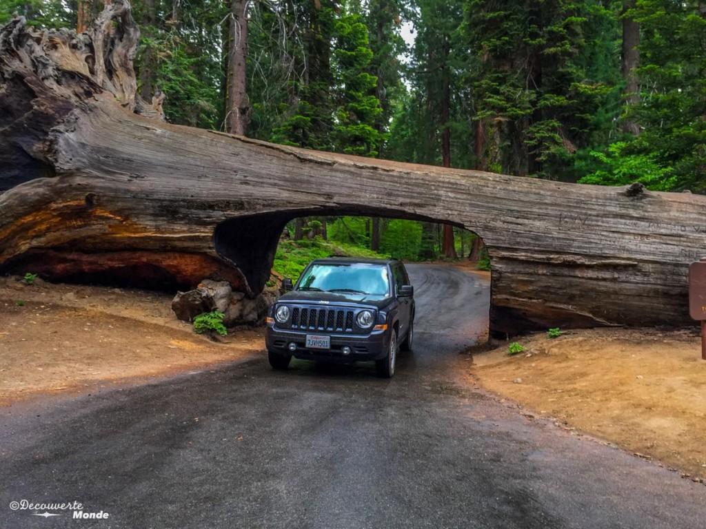 que voir en californie sequoia