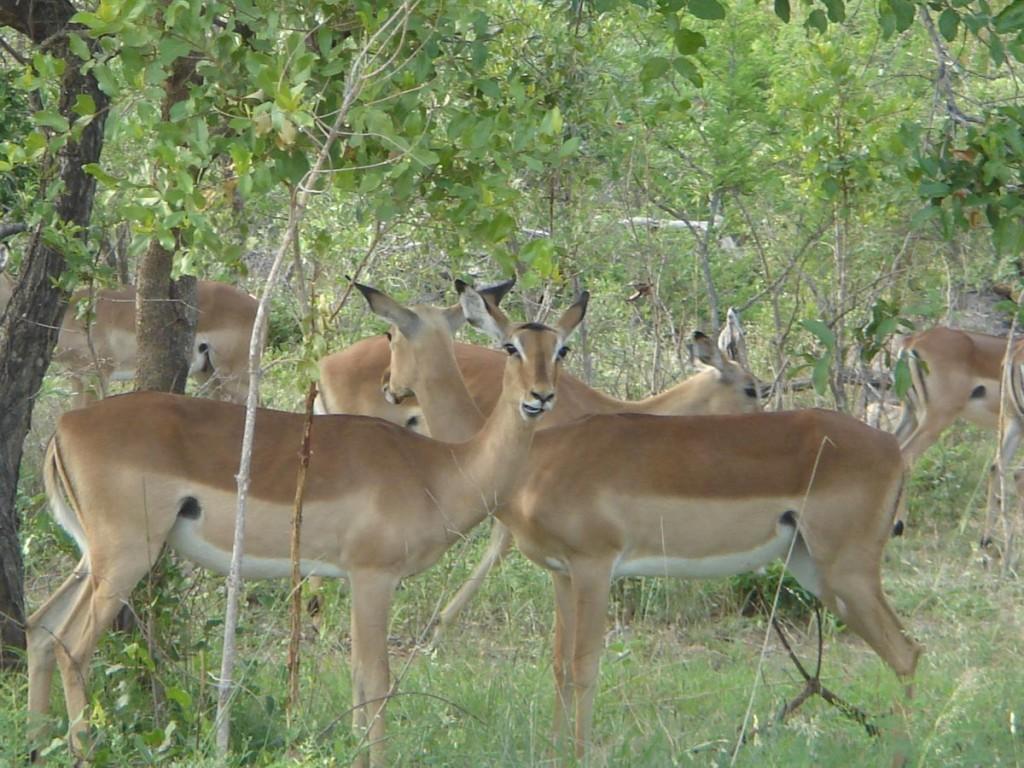 safari voyage en Afrique du Sud