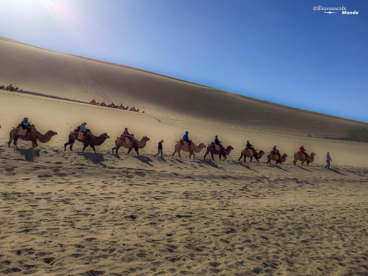 chameau dunhuang chine
