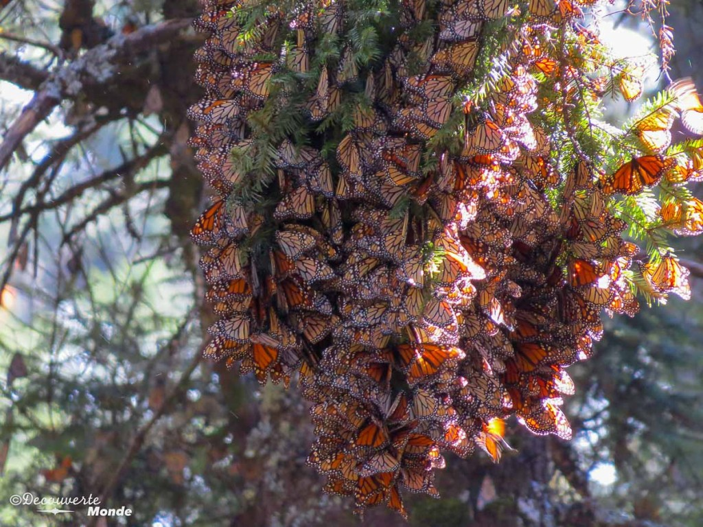 sanctuario mariposa monarca
