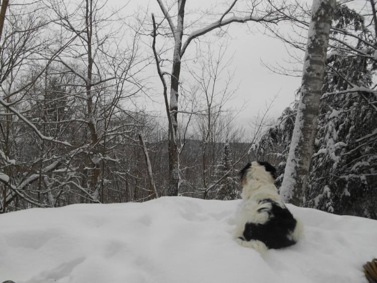 hiver québécois