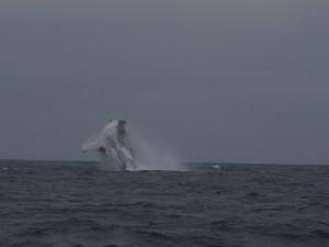 baleine équateur