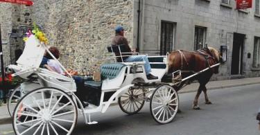 calèche vieux-montréal