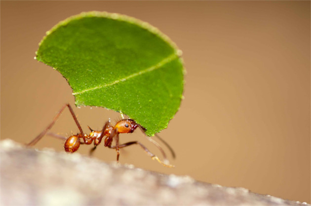 photographie insecte