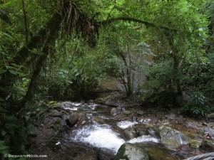 cocora forêt