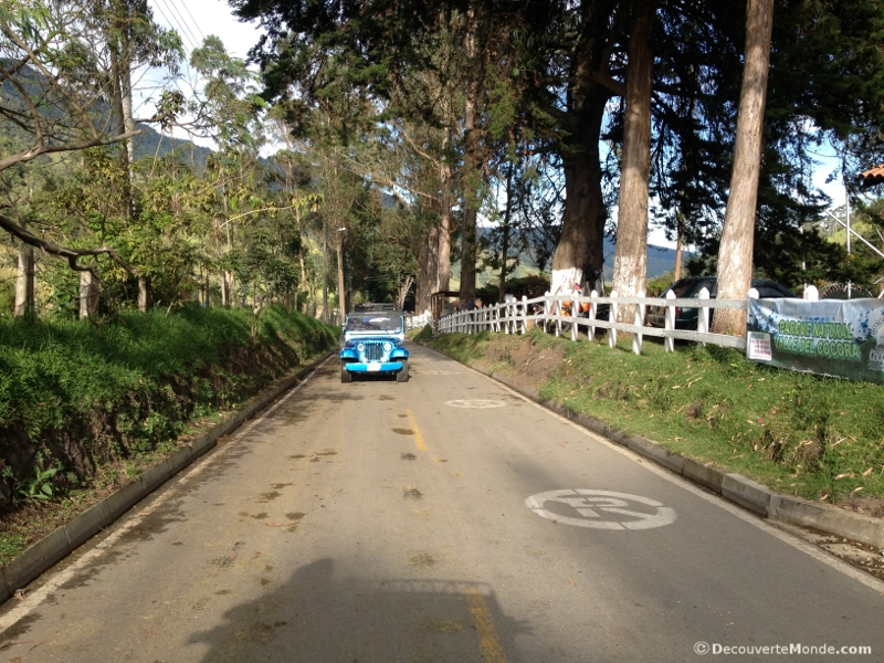 cocora willys