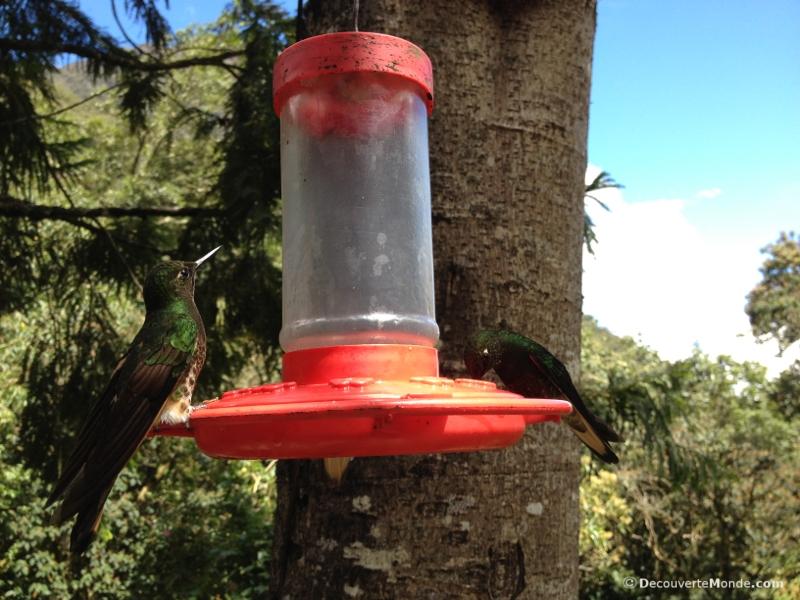 colibri acaime cocora