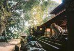 Dans le sanctuaire du Monkey Forest à Ubud à Bali en Indonésie. Dans mon article sur Que faire à Bali et visiter en 8 coups de cœur. #bali #indonesie #voyage #asie #ubud #monkeyforest