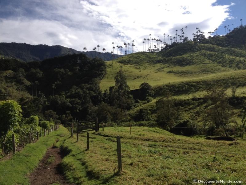 trek vallée de cocora