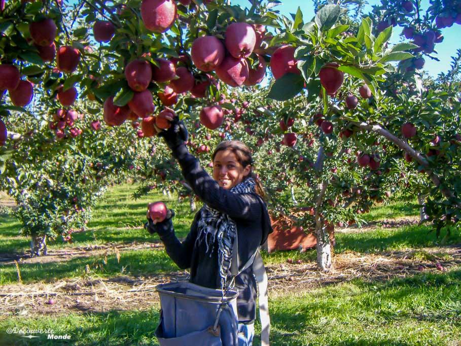 fruit picking voyager et travailler