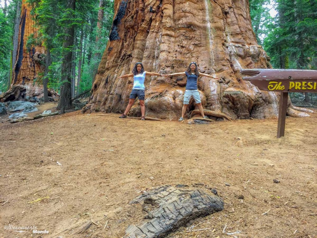 sequoia national park