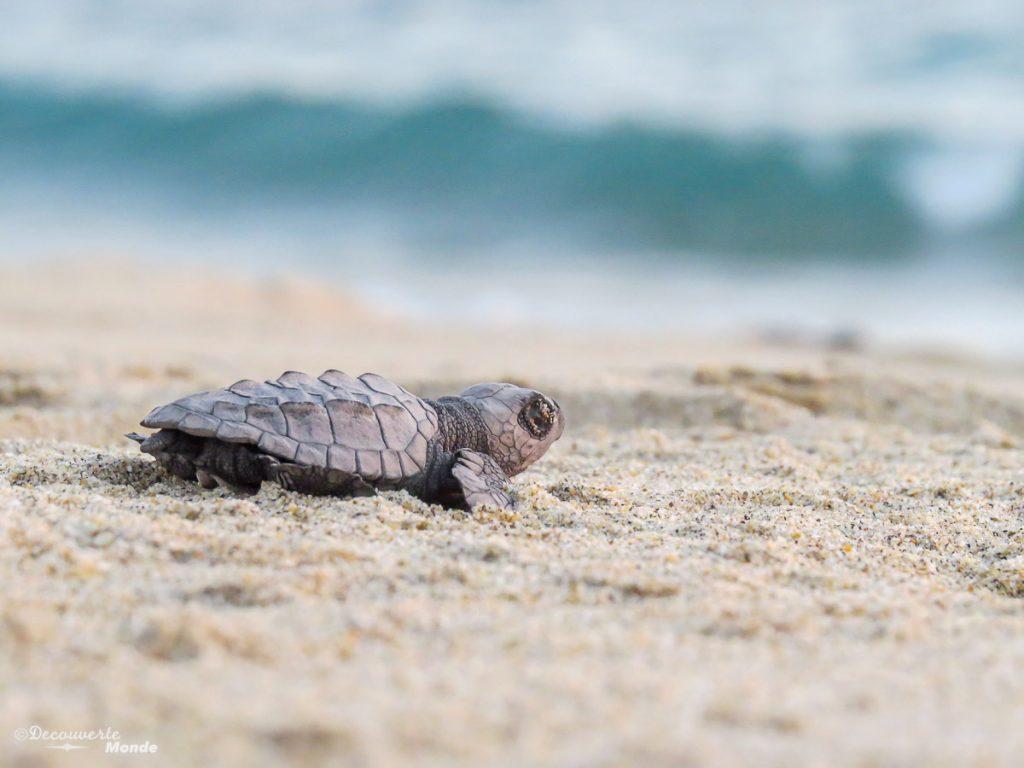 mazunte tortues hidden place