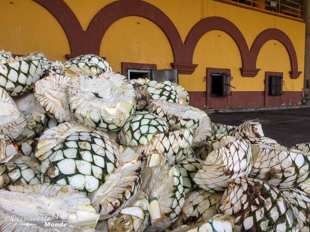 guadalajara tequila tour