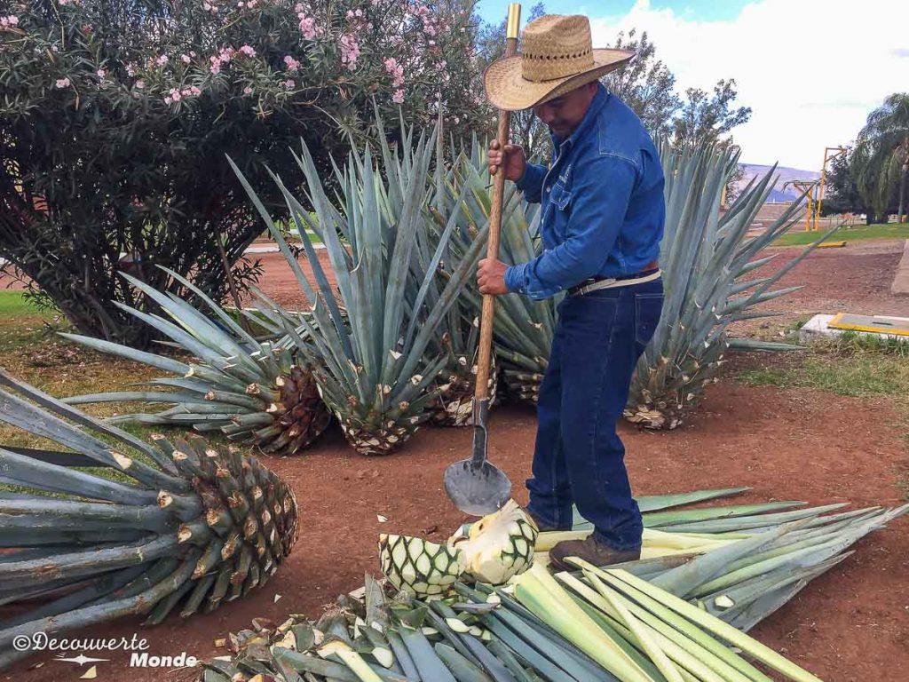 tequila tour guadalajara