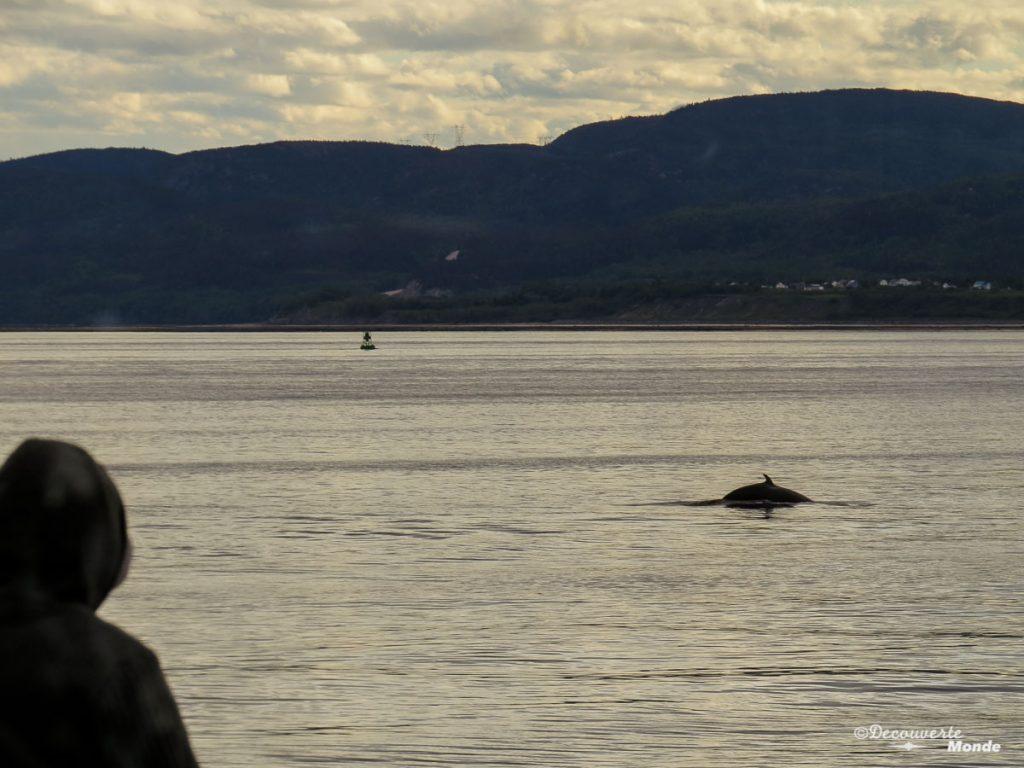 baleines tadoussac road trip au québec