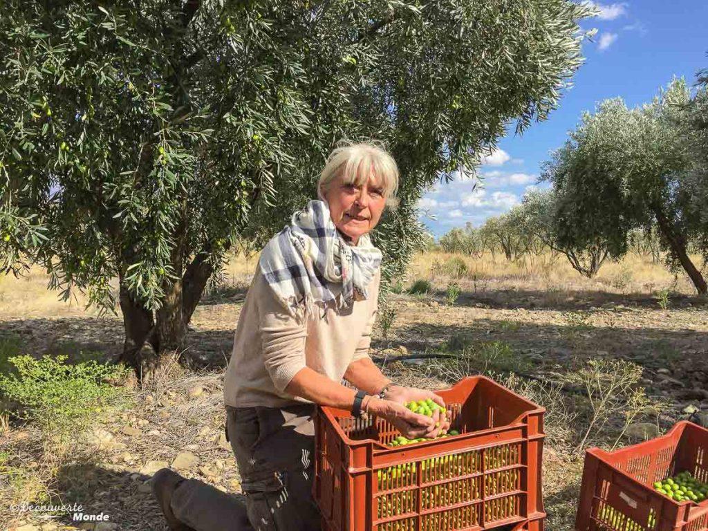 Visiter l'Aude pays Cathare en 7 idées de choses à faire. Ici dans l'oliveraie du Mas d'Antonin. Retrouvez l'article ici: https://www.decouvertemonde.com/visiter-l-aude-pays-cathare