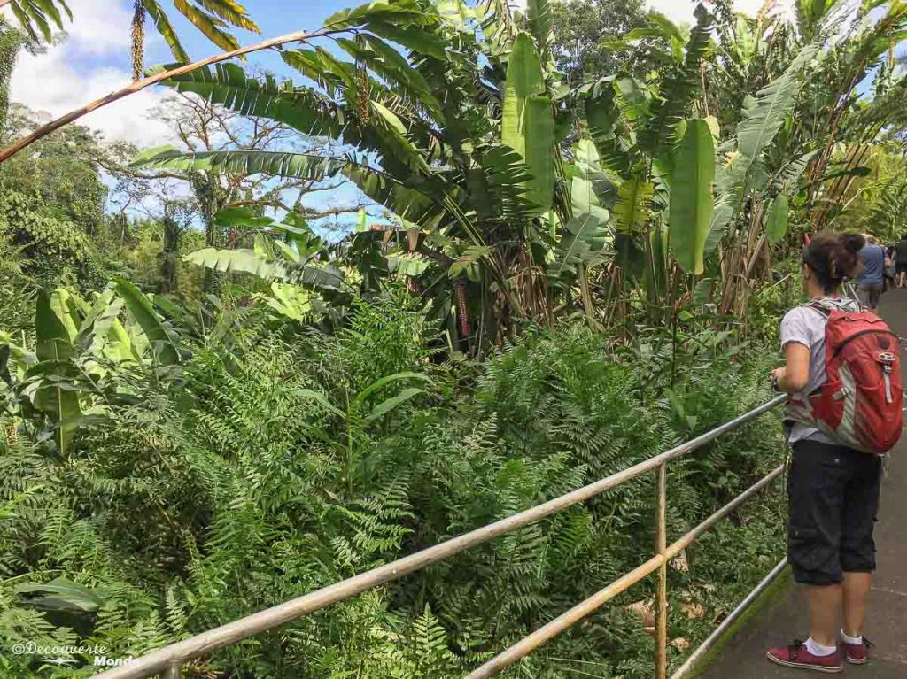 Big Island : Mon voyage de 10 jours sur la plus grande des îles d'Hawaii. Ici sur le sentier en boucle des chutes Akaka. Retrouvez l'article ici: https://www.decouvertemonde.com/big-island-voyage-iles-hawaii