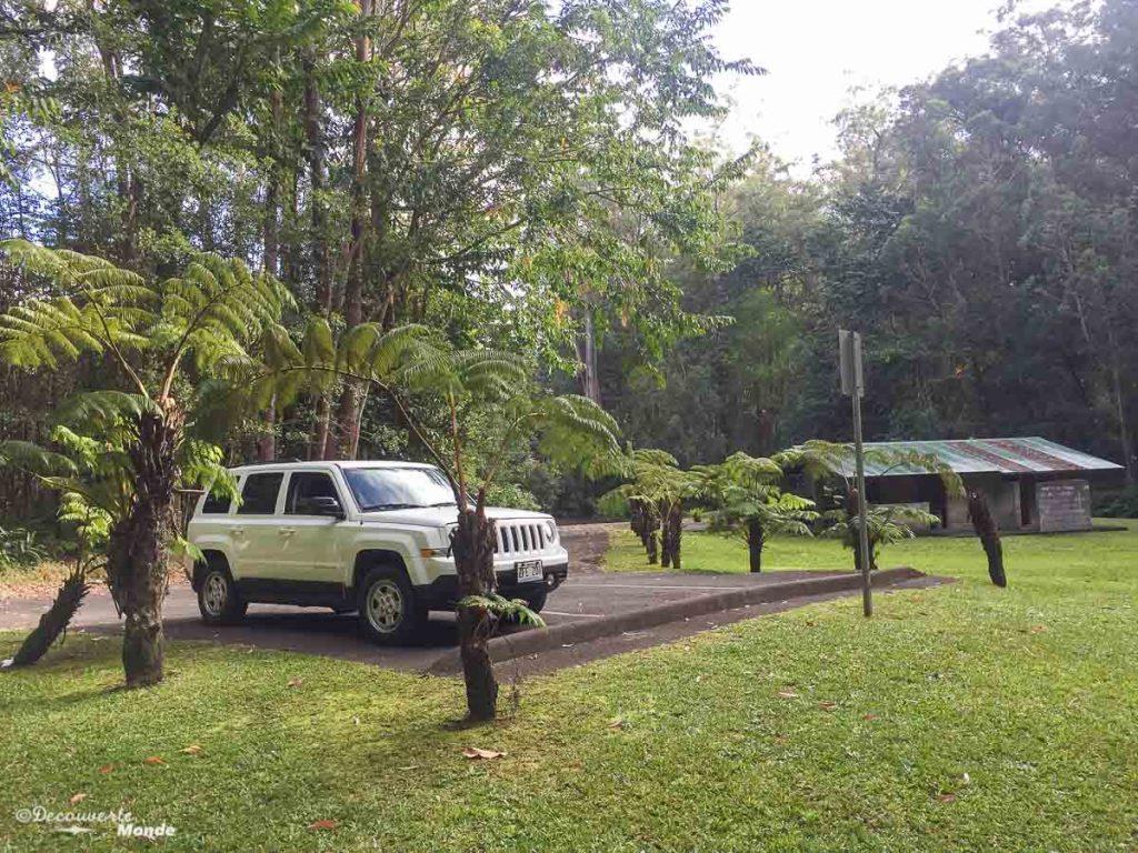 Big Island : Mon voyage de 10 jours sur la plus grande des îles d'Hawaii. Ici au camping du parc Kalopa. Retrouvez l'article ici: https://www.decouvertemonde.com/big-island-voyage-iles-hawaii