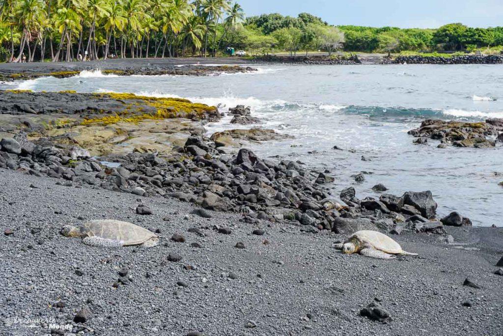 Big Island : Mon voyage de 10 jours sur la plus grande des îles d'Hawaii. Ici des tortues géantes vertes sur la plage Panalu'u à Hawaii. Retrouvez l'article ici: https://www.decouvertemonde.com/big-island-voyage-iles-hawaii