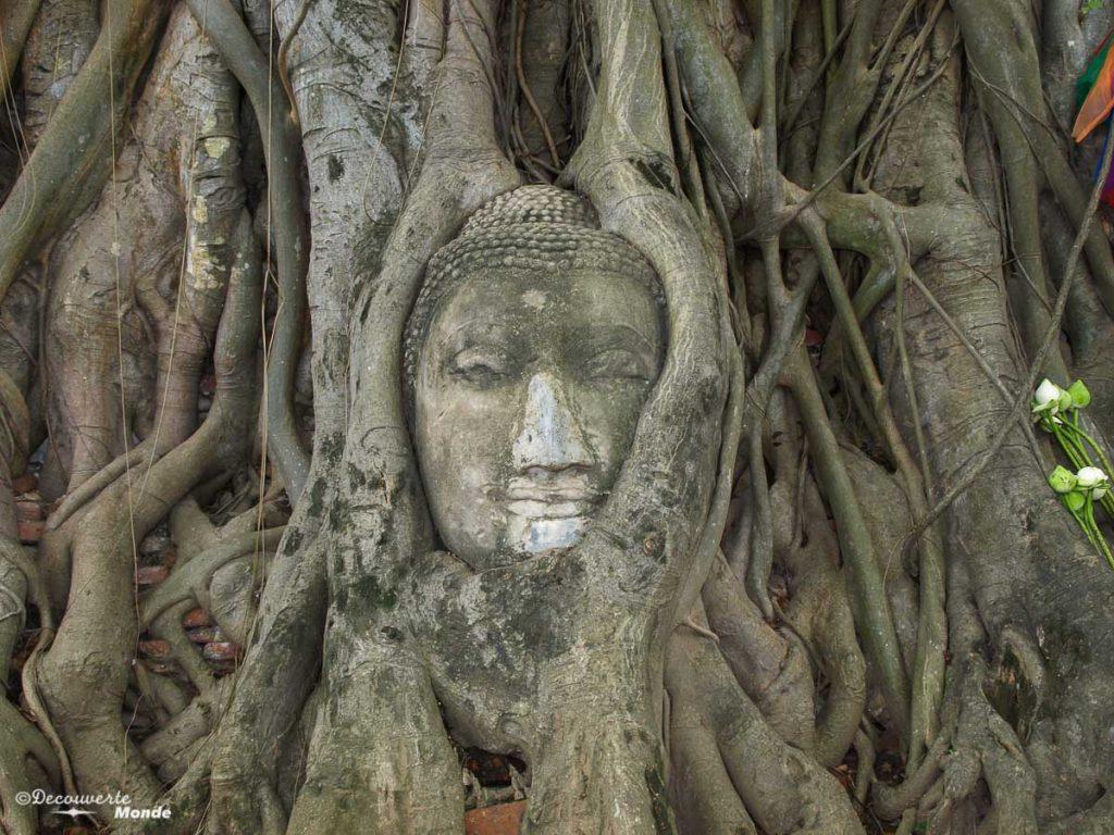 La tête du bouddha du Wat Mahathat, un temple à visiter à Ayutthaya en Thaïlande. Photo tirée de mon article Ayutthaya en Thaïlande : 6 principaux temples d'Ayutthaya à voir et visiter. #ayutthaya #unesco #thailande #asie #asiedusudest #voyage #ruine #bouddhisme
