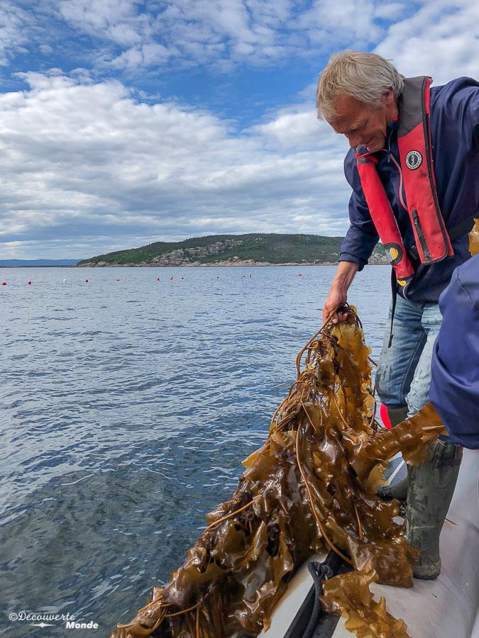 Récolte des algues à la Ferme Purmer sur l'île Grosse Boule à Sept-îles. Photo tirée de mon article Quoi faire à Sept-Îles au Québec : Voyage et tourisme sur la Côte-Nord. #septiles #cotenord #quebec #voyage #quebecoriginal #explorecanada #canada