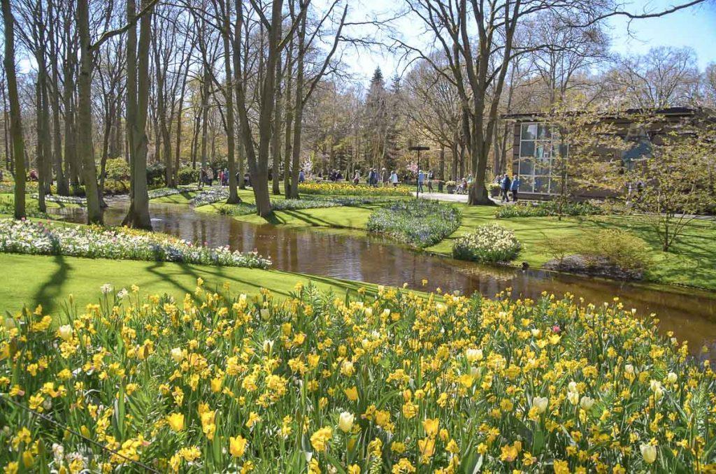 Les tulipes du parc Keukenhof à visiter à Amsterdam. Photo tirée de mon article Visiter Amsterdam : Que faire et voir dans cette ville le temps d'un week-end. #amsterdam #paysbas #europe #voyage #tulipe #citytrip #keukenhof