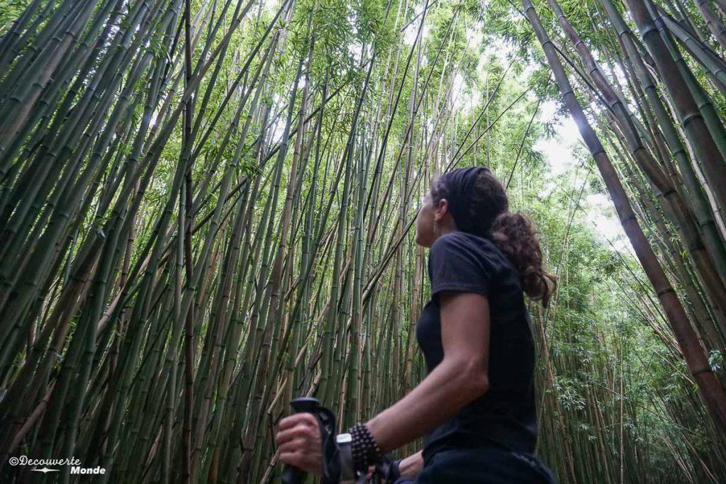 Forêt de bambous sur la Pipiwai trail sur la Hana Road à Maui à Hawaii dans mon article Maui à Hawaii : Que faire en 10 jours de road trip sur l'île de Maui #maui #hawaii #hawai #etatsunis #usa #voyage #hanaroad #bambou