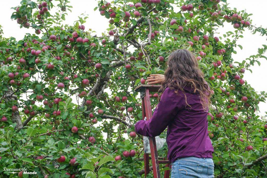Auto-cueillette de pommes au verger Labonté de la pomme dans mon article Sur la Route gourmande des Laurentides avec la Navette Nature #laurentides #quebec #navettenature #routegourmande #agrotourisme #verger #vignoble