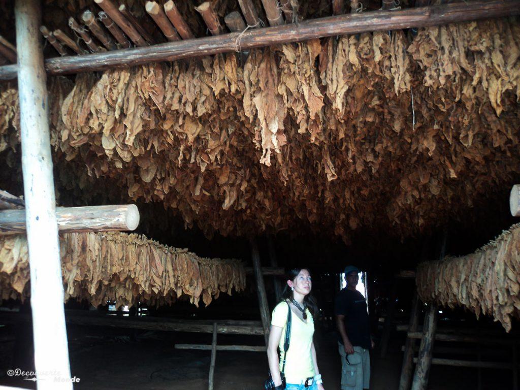 Séchoir à tabac dans la vallée de Vinales à Cuba dans mon article Viñales à Cuba : Explorer la campagne cubaine dans la vallée de Viñales #cuba #vinales #unesco #campagne #voyage