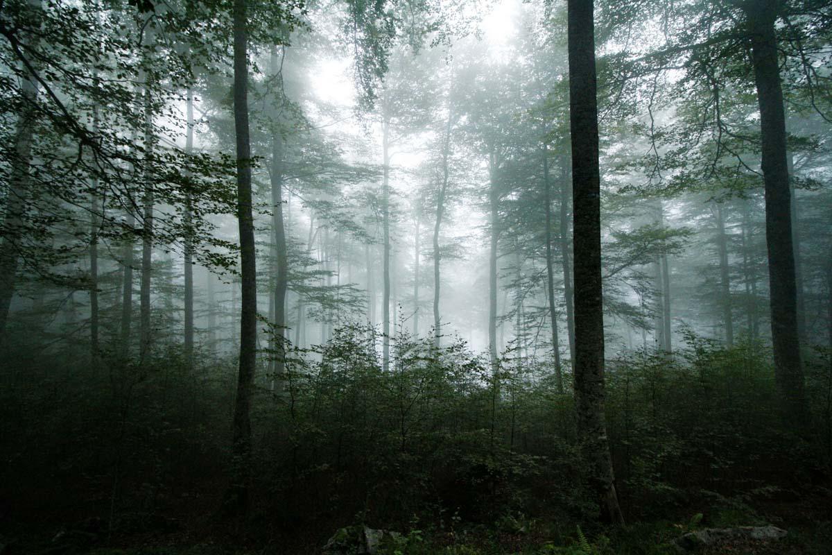 Forêt d'Iraty en Pays Basque en Nouvelle-Aquitaine dans mon article Région de Nouvelle-Aquitaine en France en 12 incontournables à visiter #nouvelle-aquitaine #france #europe #voyage