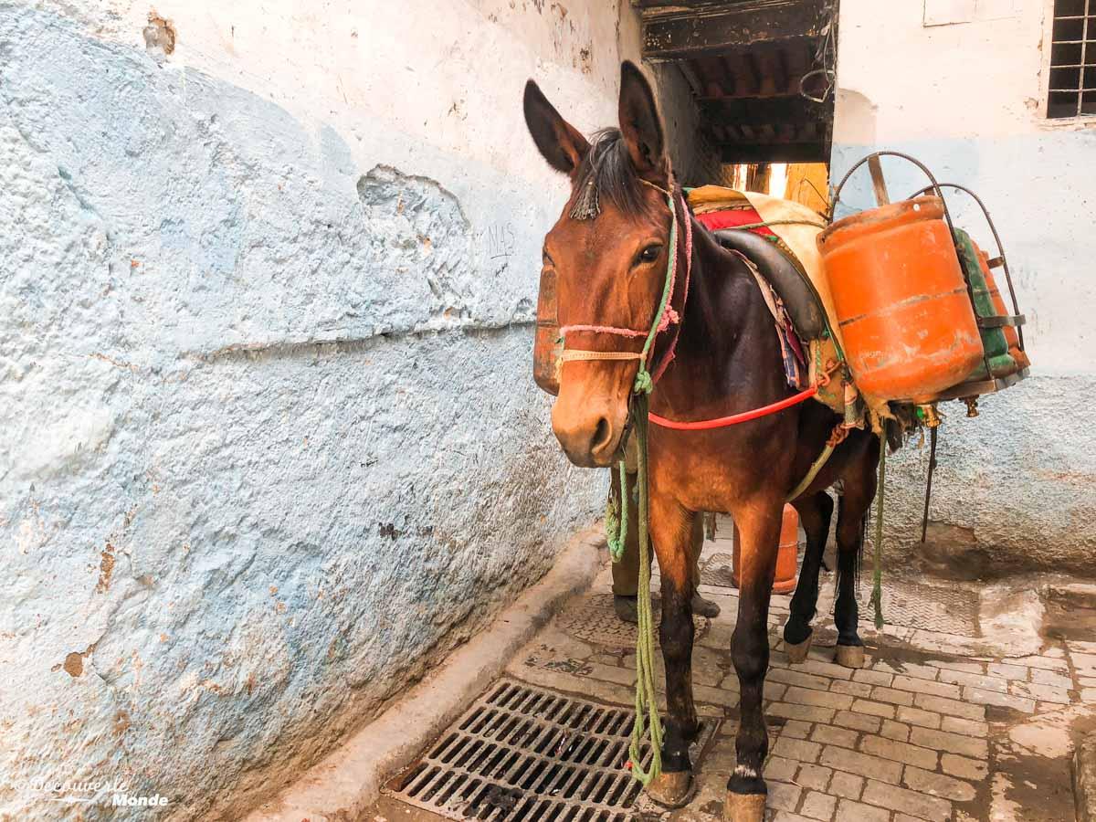 Transport de marchandises par ânes et chevaux dans la Médina de Fès dans notre article Visiter Fès au Maroc : Découverte de sa vieille-ville, la Médina de Fès #fes #maroc #medina #voyage #maghreb #unesco